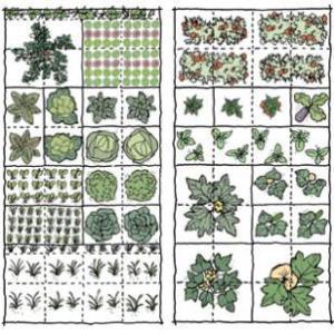 vegetable_garden_sketch_310
